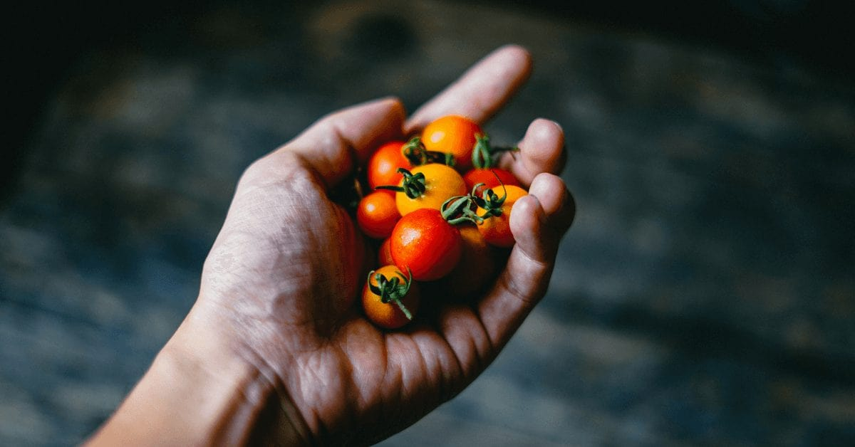 Tomato foods for skin health